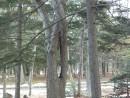 Завитое дерево