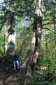 в окружении могучих деревьев