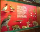 Экспозиция музея природы Лазовского заповедника. Красная книга