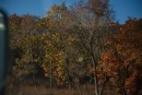 Осенний лес. Шкотовский район.