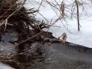 Лед. Река Стеклянуха. Шкотовский район. Ранняя весна.