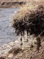 Висячие камни. Река Стеклянуха. Шкотовский район. Ранняя весна.