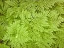 зеленые ладошки