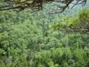 """тайга"" - великий лес"