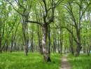 Лес на берегу Уссури