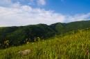 По началу приятные луга на холмах, а потом ужасные распадки с травою выше человеческого роста.