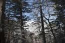 Вершина за лесом