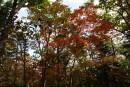 Краски осени в Ботаническом саду.