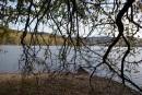 Под тенью струящихся ветвей. Седанкинское водохранилище.