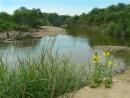Река Адими возле Славянки.