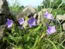 Цветы и камни, Генеральская сопка возле Славянки.