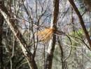 метелка и иголка