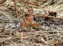 первые бабочки