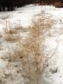 трава растапливает лед