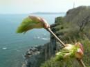 Весна на острове Герасимова