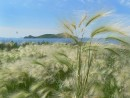 Вид с острова Антипенко на остров Сибирякова.