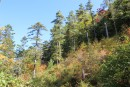 лес у подножья
