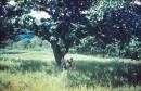 на спуске с водораздела - вот такой чудесный одинокий царь-дуб