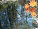 Отражение. Река Алимовка, Хасанский  р-н.