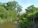 Река Алимовка, Хасанский Район.