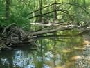 Река Алимовка. Хасанский район.