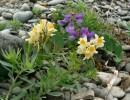 Цветы на камнях.