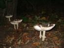 ночная жизнь грибов - все девчонки по парам...)))