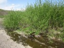 Кусты. Река Стеклянуха. Шкотовский район. Ранняя весна.