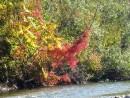 Река Стеклянуха. Шкотовский район.Осень.