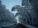 Поселок Трудовое. Деревья в снегу.