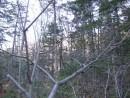 """лес уже """"разделся"""""""