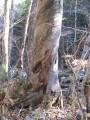 крученое дерево - говорят, нежелательно рядом долго находиться...