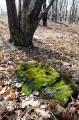 Застывшие куски лавы, покрытые мхом.