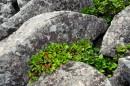 Меж камней. На вершине Пидана.