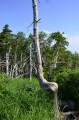"""Дерево-стул, приносящее удачу. Рядом со """"Следом Бога""""."""