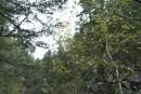 Лес. Тернейский район.