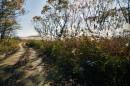 Дорога петляет квозь лес. Полуостров Тобизина.