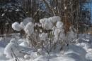 Снежки. Шкотовское плато. Шкотовский район.