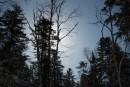 Солнце в деревьях. Шкотовское плато. Шкотовский район.