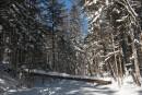 Дорога к водопаду Тигровый. Шкотовское плато. Шкотовский район.