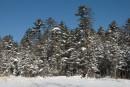 Снежный лес. Шкотовское плато. Шкотовский район.