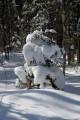 Елочка в снегу.  Шкотовский район.