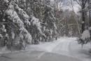 Дорога в лесу. Шкотовское плато. Шкотовский район.