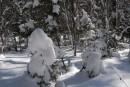 Елочка в снегу. Шкотовское плато. Шкотовский район.