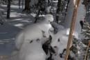 Елки в снегу. Шкотовское плато. Шкотовский район.