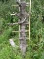 """дерево """"съело"""" лестницу :)"""