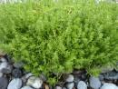 растение у берега