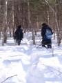 Тропа в снегу. Шкотовское плато. Шкотовский район.