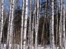 Роща. Шкотовское плато. Шкотовский район.
