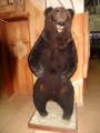 Медведь анфас. Музей природы Лазовского заповедника. Лазовский район.